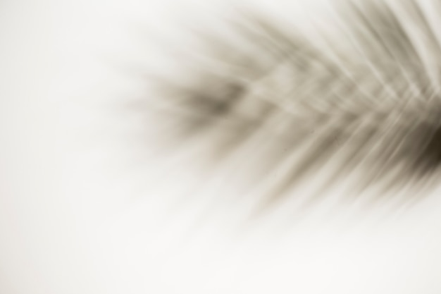 Design feito com folha de palmeira desfocada no fundo branco