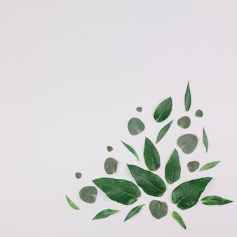 Design feito com folhas verdes no canto do pano de fundo branco
