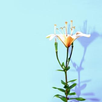 Design minimalista de lily flower