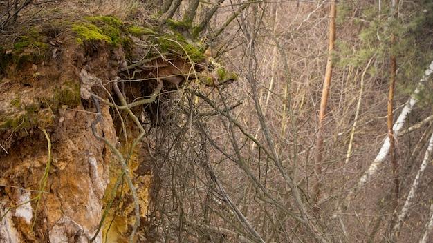 Deslocamento da terra na floresta devido ao corte de árvores.