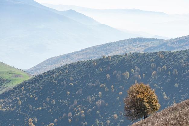 Deslumbrante paisagem de natureza outono com uma única árvore em primeiro plano