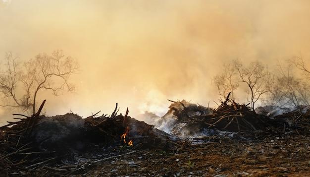 Desmatamento da floresta tropical na ásia. poluição do ar e fumaça de campos agrícolas queimados. Foto Premium