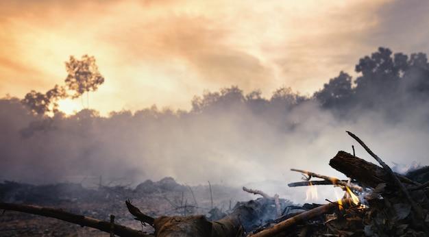Desmatamento da floresta tropical na ásia. poluição do ar e fumaça de campos agrícolas queimados.