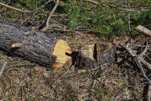 Desmatamento de tocos e toras