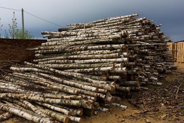 Desmatamento, destruição da floresta. colheita de madeira. pilha, pilha de muitas toras serradas de pinheiros e árvores de vidoeiro. foto de alta qualidade Foto Premium