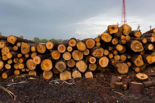 Desmatamento, destruição da floresta. colheita de madeira. pilha, pilha de muitas toras serradas de pinheiros. foto de alta qualidade