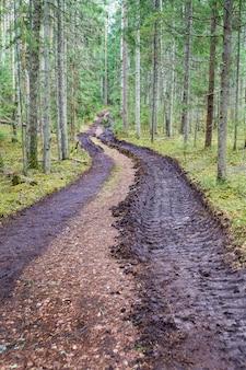Desmatamento e extração de madeira, remoção de madeira, remoção de madeira grande impressão de pneu de carro em vestígios de solo