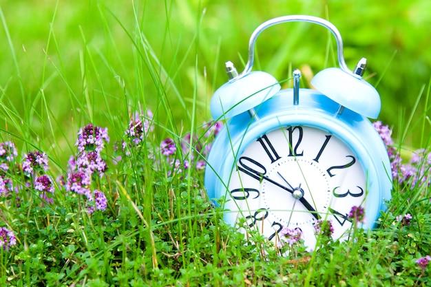Despertador, relógio azul na grama verde e tomilho
