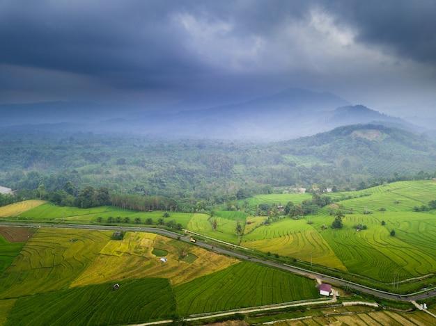 Destino de viagem na ásia beleza campos de arroz no norte bengkulu