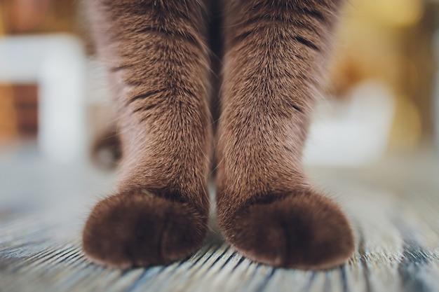 Detalhe a foto de patas macias de gato enquanto está sentado na mesa.