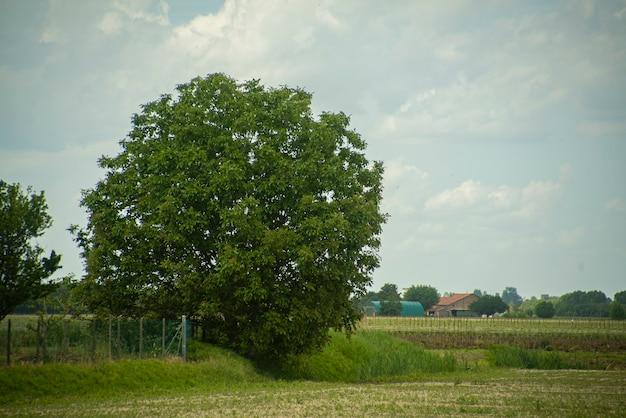 Detalhe da árvore no campo na primavera, paisagem campestre com árvores
