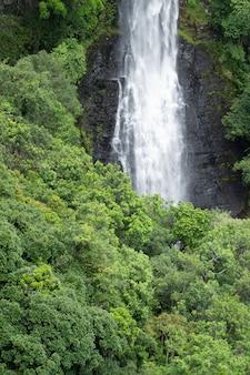 Detalhe da cachoeira entre as árvores em uma floresta tropical no brasil