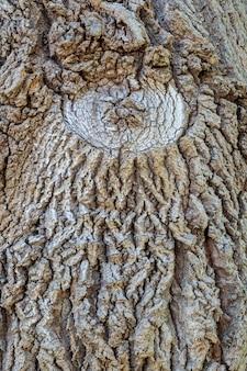 Detalhe da casca do carvalho
