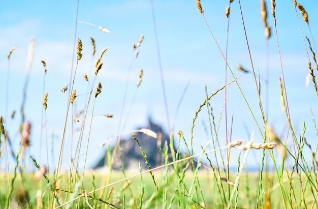 Detalhe da grama em primeiro plano com a silhueta desfocada do mont saint michel