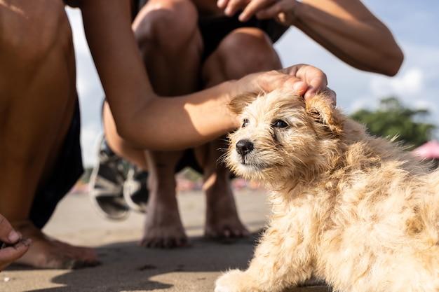 Detalhe da mão de duas meninas acariciando um cachorro na praia