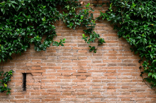 Detalhe da parede de tijolo vermelho com arcos decorativos e planta em crescimento