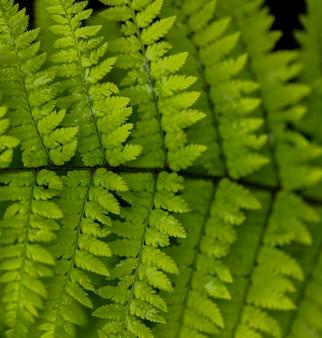 Detalhe das folhas de samambaia de madeira