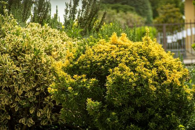 Detalhe das plantas no canteiro de flores na primavera