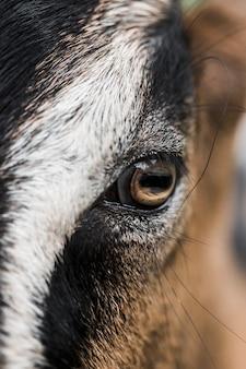 Detalhe, de, cabra, olho