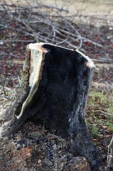 Detalhe de carvão de madeira queimada floresta após desastre de fogo
