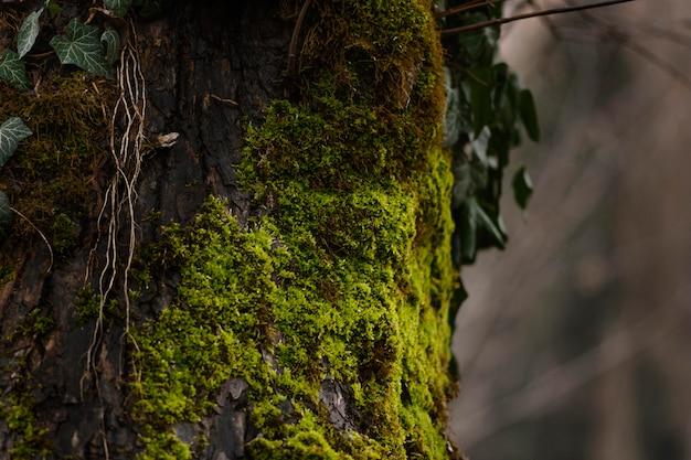 Detalhe de close-up de floresta selvagem