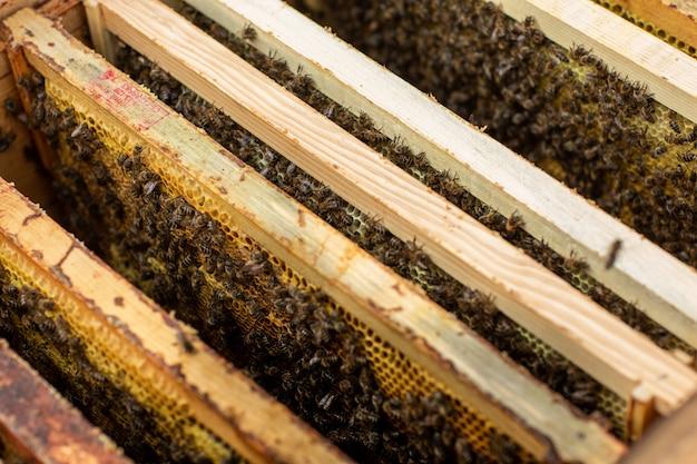 Detalhe de colmeia de abelhas