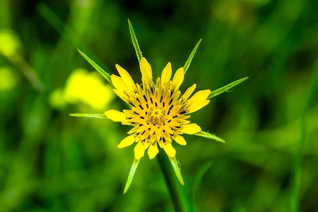 Detalhe de flor amarela com pontas no caule da montanha.