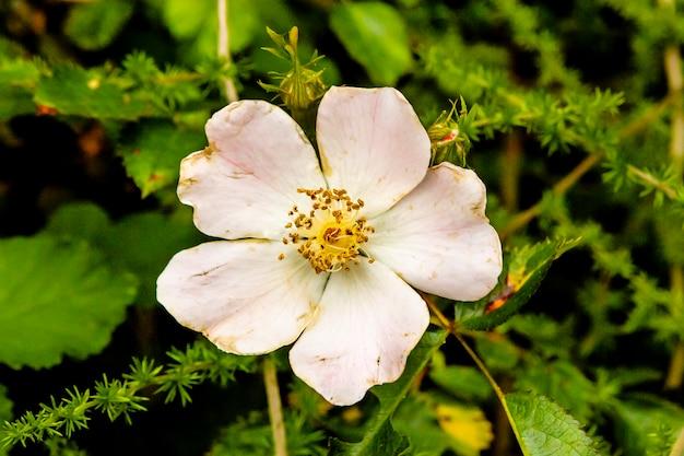 Detalhe de flor branca com toques de rosa em fundo verde.