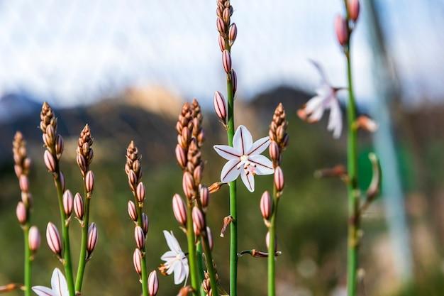 Detalhe de flores com raios de sol e teias de aranha na montanha de alicante.