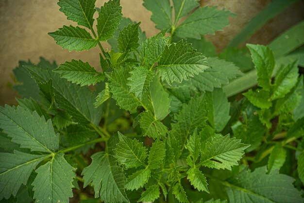 Detalhe de folhas verdes na natureza na primavera, textura das folhas