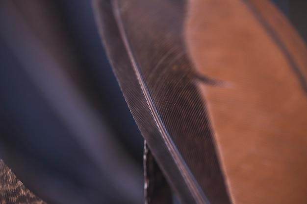 Detalhe, de, marrom preto, pena, fundos