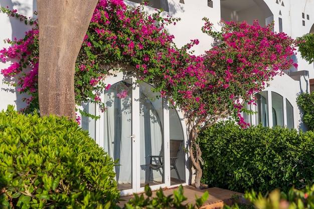 Detalhe de parede branca com varanda de uma casa e árvore de flor vermelha na rua do egito em sharm el sheikh