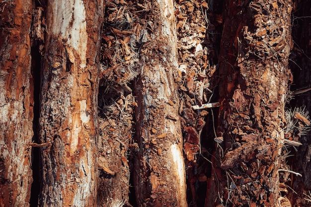 Detalhe de toras antigas para fazer compostagem na floresta.