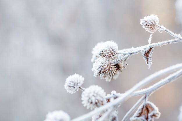 Detalhe de um arbusto congelado em uma manhã de inverno gelado