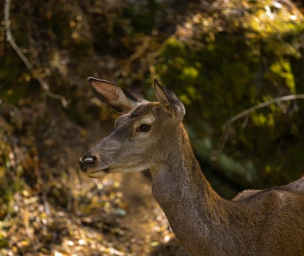 Detalhe de um cervo entre a natureza selvagem