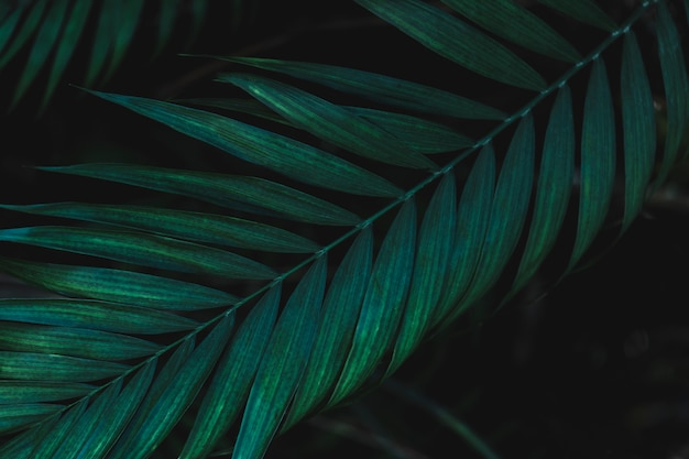 Detalhe, de, um, folha verde