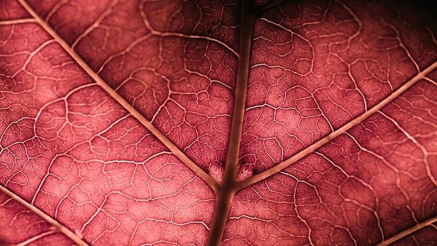 Detalhe, de, um, folha vermelha