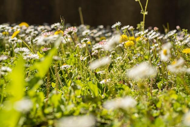 Detalhe de um jardim de flores na primavera com pequenas flores na grama
