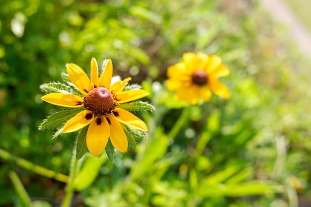 Detalhe de uma bela flor amarela com pétalas de seda e fundo desfocado.