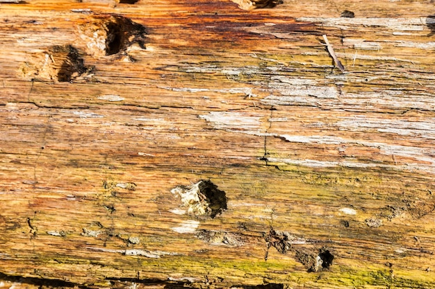 Detalhe de uma casca muito antiga sob sol quente
