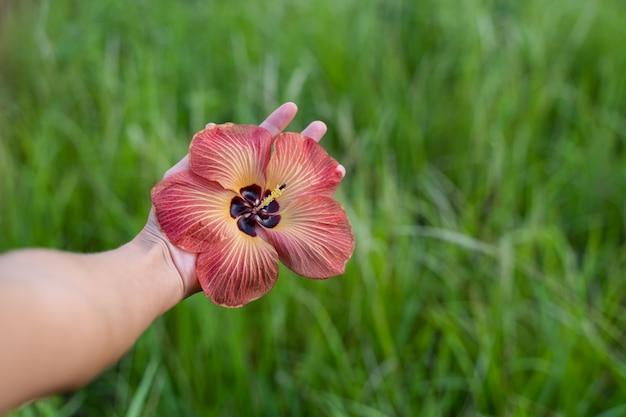 Detalhe de uma mão segurando uma flor exótica aberta no meio de um campo verde