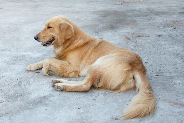 Detalhe do cão, animal de estimação