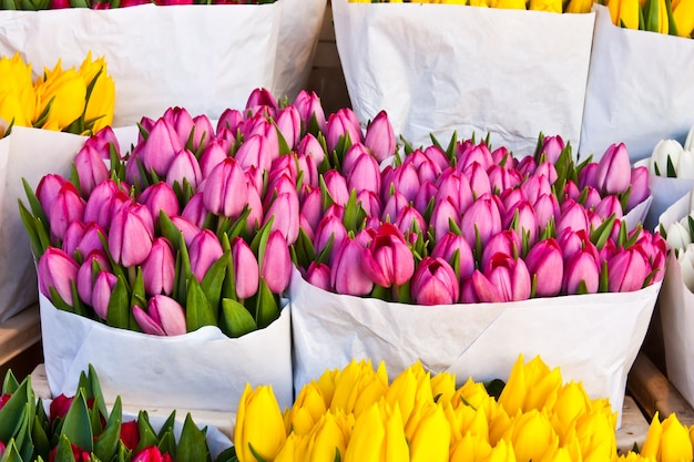 Detalhe do mercado de flores de amsterdã: as melhores tulipas do mundo