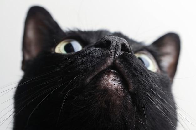 Detalhe do nariz do gato preto bem próximo à câmera