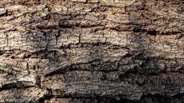 Detalhe e textura da casca marrom de uma árvore.