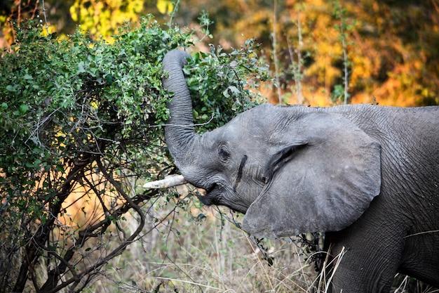 Detalhe elefante