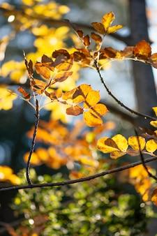 Detalhe lindo em floresta selvagem Foto Premium