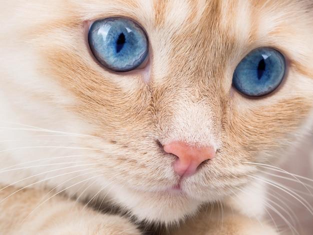 Detalhe, tiro, de, macio, gato, patas, enquanto, sentar tabela, cute, rosto vermelho, gato, closeup