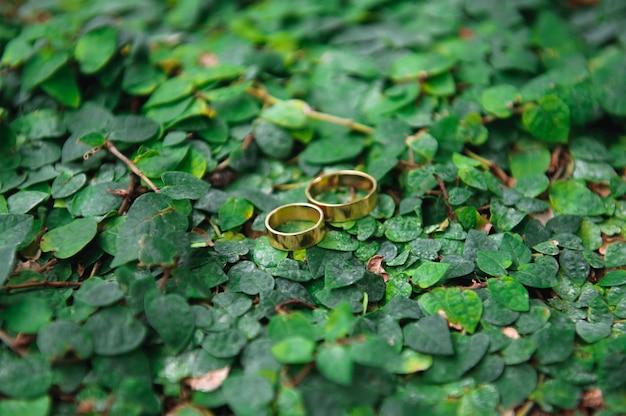 Detalhes anéis de casamento folhas outono natureza sol
