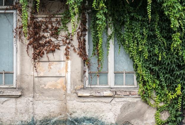Detalhes antigos do edifício com hera verde